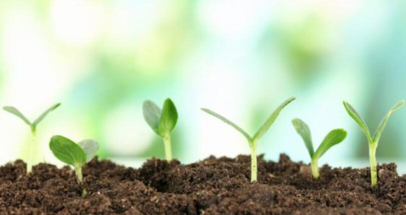 SEEK OUT GROWTH IN THE AGRICULTURE, HORTICULTURE & GARDENING SECTORS WITH THESE 4 ЕVENTS